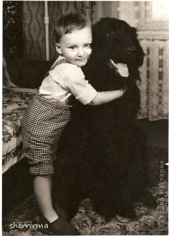 Немецкая овчарка Дэн, ротвейлерша Витта и восточноевропейская овчарка Рэтт фото 2