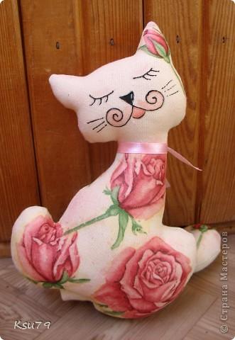 кошачья компания фото 2