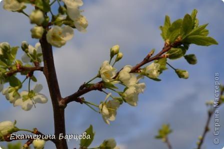 Фото моего родного края (Волынщино) фото 1