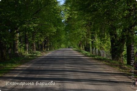 Фото моего родного края (Волынщино) фото 3