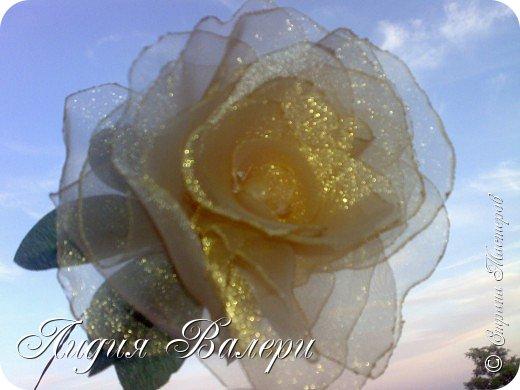 Моя роза фото 6