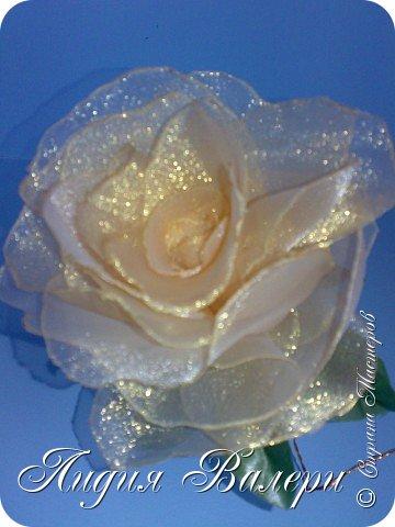 Моя роза фото 7