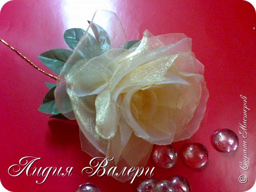 Моя роза фото 2