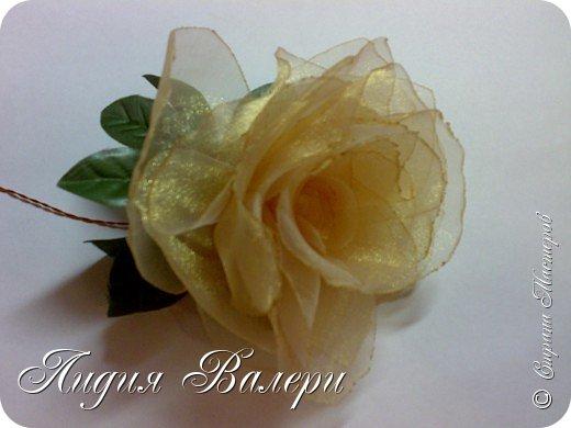 Моя роза фото 3