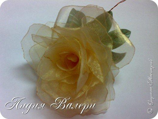 Моя роза фото 4