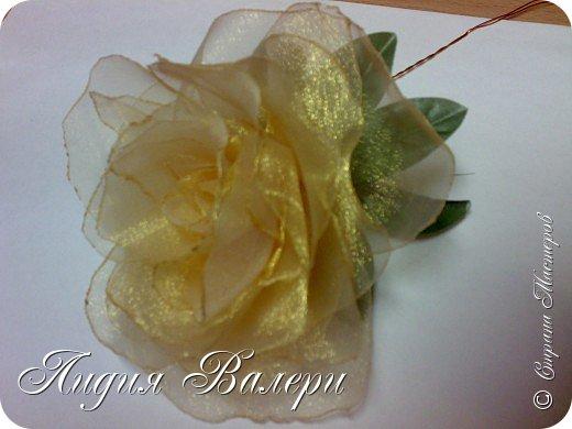 Моя роза фото 5