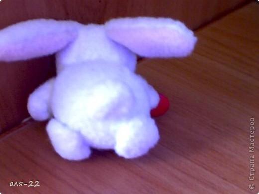 кролик фото 3