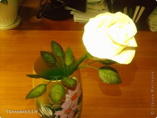 это моя первая роза фото 4