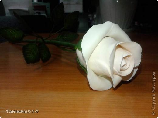 это моя первая роза фото 1