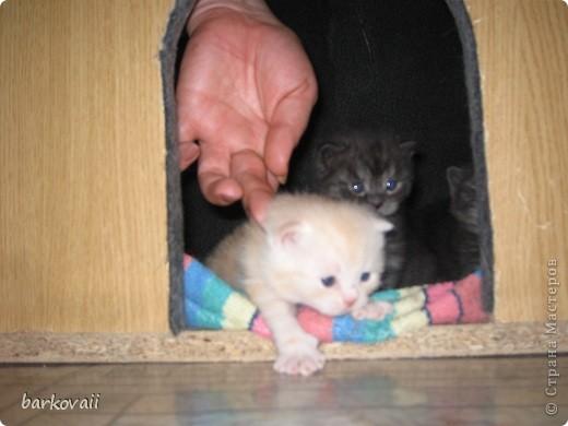 Вот такой непонятной зверюшкой я родился фото 3