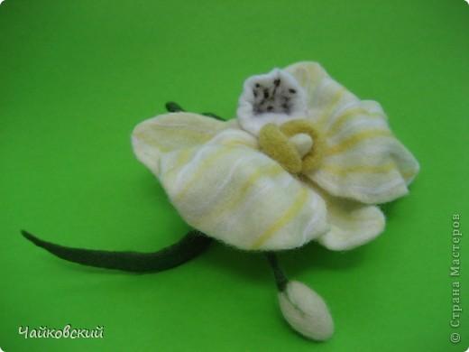 Орхидейка фото 3
