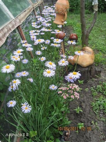 За эту неделю группа украинцев родилась у меня на даче. фото 14
