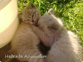 Вот такие драчуны живут у моей бабушки)) фото 1