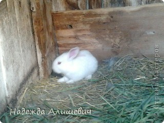 Вот такие драчуны живут у моей бабушки)) фото 7