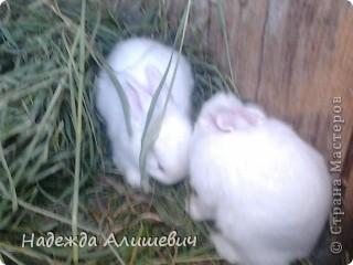 Вот такие драчуны живут у моей бабушки)) фото 8