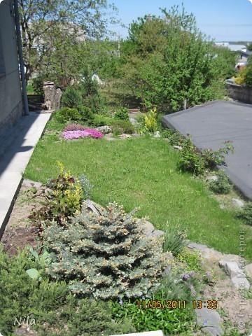 НЕсколько лет назад мы переехали в домик с прекрасным ланшафтом. Там раньше использовалось под огород кусочек территории, остальное все , (склоны), заросло кустами , деревьями и имело вид дикой природы. Тоже, по своему, было красиво, как в парке. Но хотелось цветов и газоны. И маленький огородец, где бы росло все , но с минимуиом усилий. И вот прошло 4 года. Мы с мужем и сыном, почти своими усилиями ,сделали такой мини парк или сад, или  как назвать не знаю, но место где мы все и все наши друзья и родственники любим отдыхать Приглашаю и вас к себе в гости. Этот уголок под окнами. Спереди построили гараж. Видно его крышу. Пока еще не придумали , как украсить ее. Может у кого-то есть идеи... Я постепенно буду грузить фото и описывать растения , может кому интересно, заглядывайте. Буду пополнять. очень тяжело грузится  фото 1