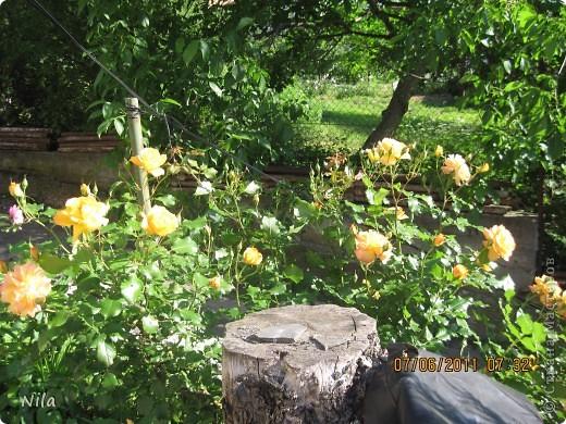 НЕсколько лет назад мы переехали в домик с прекрасным ланшафтом. Там раньше использовалось под огород кусочек территории, остальное все , (склоны), заросло кустами , деревьями и имело вид дикой природы. Тоже, по своему, было красиво, как в парке. Но хотелось цветов и газоны. И маленький огородец, где бы росло все , но с минимуиом усилий. И вот прошло 4 года. Мы с мужем и сыном, почти своими усилиями ,сделали такой мини парк или сад, или  как назвать не знаю, но место где мы все и все наши друзья и родственники любим отдыхать Приглашаю и вас к себе в гости. Этот уголок под окнами. Спереди построили гараж. Видно его крышу. Пока еще не придумали , как украсить ее. Может у кого-то есть идеи... Я постепенно буду грузить фото и описывать растения , может кому интересно, заглядывайте. Буду пополнять. очень тяжело грузится  фото 3