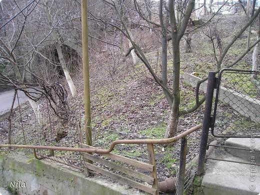 НЕсколько лет назад мы переехали в домик с прекрасным ланшафтом. Там раньше использовалось под огород кусочек территории, остальное все , (склоны), заросло кустами , деревьями и имело вид дикой природы. Тоже, по своему, было красиво, как в парке. Но хотелось цветов и газоны. И маленький огородец, где бы росло все , но с минимуиом усилий. И вот прошло 4 года. Мы с мужем и сыном, почти своими усилиями ,сделали такой мини парк или сад, или  как назвать не знаю, но место где мы все и все наши друзья и родственники любим отдыхать Приглашаю и вас к себе в гости. Этот уголок под окнами. Спереди построили гараж. Видно его крышу. Пока еще не придумали , как украсить ее. Может у кого-то есть идеи... Я постепенно буду грузить фото и описывать растения , может кому интересно, заглядывайте. Буду пополнять. очень тяжело грузится  фото 13