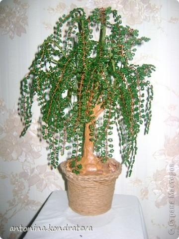 Бисерное дерево.