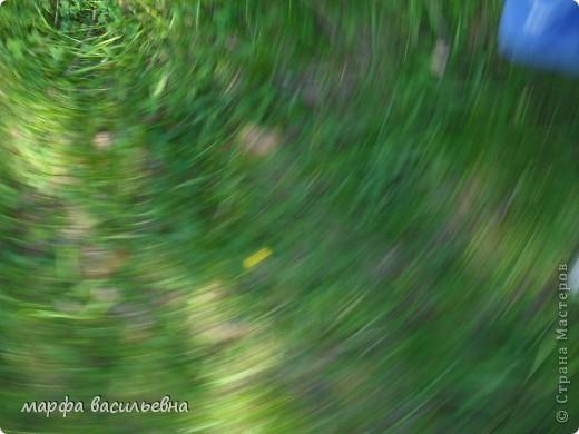 В воскресенье ходили с подругой в лес, благо он рядом. Он так манит и зазывает, останавливают только комары. Господи, зачем ты их придумал. Хорошо, что по дороге мы зашли в маг. и купили средство защиты. фото 7