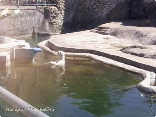 Добро пожаловать в московский зоопарк!Предлагаю вам отправиться на экскурсию по нему. Снято 12,06,2011 White swans - белые лебеди... фото 23