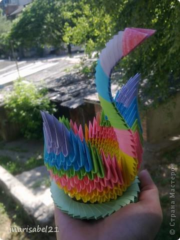 мой первый лебедь))) фото 1