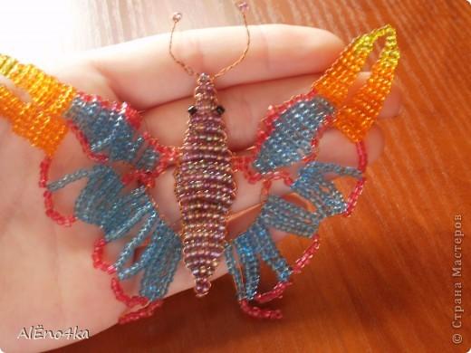 Большая и маленькая бабочки фото 2