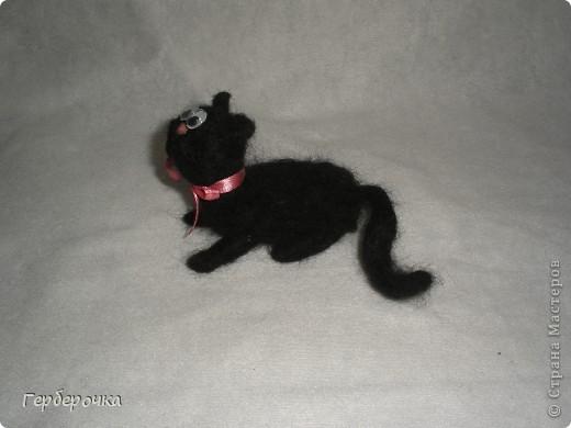 Котик Вася с бантиком на шее  шел на свидание к своей кошечке в то время как я его сфотографировала. Ах кавалер... фото 2