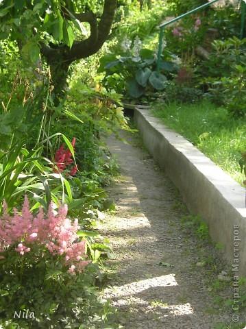НЕсколько лет назад мы переехали в домик с прекрасным ланшафтом. Там раньше использовалось под огород кусочек территории, остальное все , (склоны), заросло кустами , деревьями и имело вид дикой природы. Тоже, по своему, было красиво, как в парке. Но хотелось цветов и газоны. И маленький огородец, где бы росло все , но с минимуиом усилий. И вот прошло 4 года. Мы с мужем и сыном, почти своими усилиями ,сделали такой мини парк или сад, или  как назвать не знаю, но место где мы все и все наши друзья и родственники любим отдыхать Приглашаю и вас к себе в гости. Этот уголок под окнами. Спереди построили гараж. Видно его крышу. Пока еще не придумали , как украсить ее. Может у кого-то есть идеи... Я постепенно буду грузить фото и описывать растения , может кому интересно, заглядывайте. Буду пополнять. очень тяжело грузится  фото 22