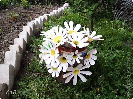 Отчего на старом пне не растут цветочки?
