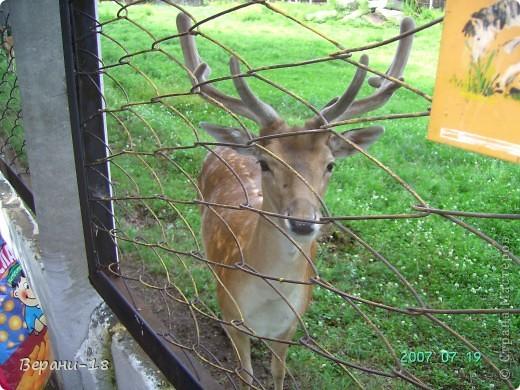 Милые Мастерицы! Приглашаю на экскурсию! ПОЛК (Природно-оздоровительный лесной комплекс) Бурабай открыл двери нового Музея природы.  фото 7