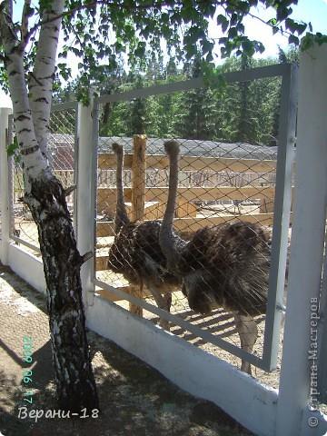 Милые Мастерицы! Приглашаю на экскурсию! ПОЛК (Природно-оздоровительный лесной комплекс) Бурабай открыл двери нового Музея природы.  фото 12