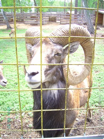 Милые Мастерицы! Приглашаю на экскурсию! ПОЛК (Природно-оздоровительный лесной комплекс) Бурабай открыл двери нового Музея природы.  фото 4