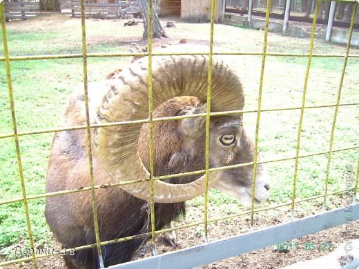 Милые Мастерицы! Приглашаю на экскурсию! ПОЛК (Природно-оздоровительный лесной комплекс) Бурабай открыл двери нового Музея природы.  фото 5