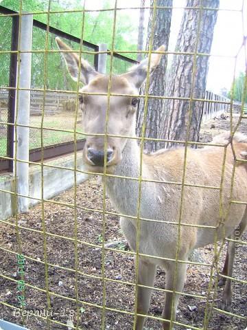 Милые Мастерицы! Приглашаю на экскурсию! ПОЛК (Природно-оздоровительный лесной комплекс) Бурабай открыл двери нового Музея природы.  фото 6