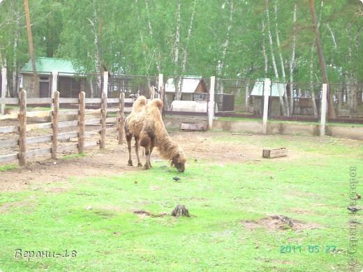 Милые Мастерицы! Приглашаю на экскурсию! ПОЛК (Природно-оздоровительный лесной комплекс) Бурабай открыл двери нового Музея природы.  фото 13