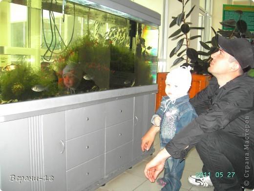 Милые Мастерицы! Приглашаю на экскурсию! ПОЛК (Природно-оздоровительный лесной комплекс) Бурабай открыл двери нового Музея природы.  фото 17