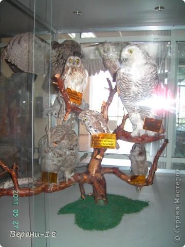 Милые Мастерицы! Приглашаю на экскурсию! ПОЛК (Природно-оздоровительный лесной комплекс) Бурабай открыл двери нового Музея природы.  фото 18