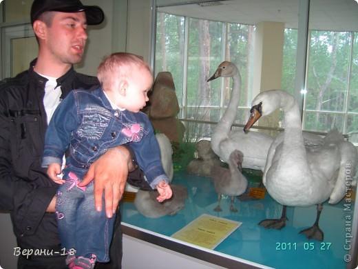 Милые Мастерицы! Приглашаю на экскурсию! ПОЛК (Природно-оздоровительный лесной комплекс) Бурабай открыл двери нового Музея природы.  фото 19