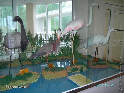 Милые Мастерицы! Приглашаю на экскурсию! ПОЛК (Природно-оздоровительный лесной комплекс) Бурабай открыл двери нового Музея природы.  фото 20