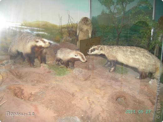 Милые Мастерицы! Приглашаю на экскурсию! ПОЛК (Природно-оздоровительный лесной комплекс) Бурабай открыл двери нового Музея природы.  фото 21