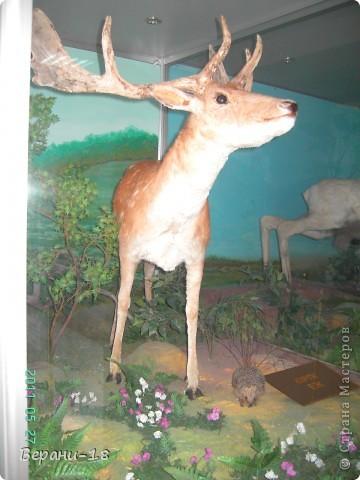 Милые Мастерицы! Приглашаю на экскурсию! ПОЛК (Природно-оздоровительный лесной комплекс) Бурабай открыл двери нового Музея природы.  фото 22
