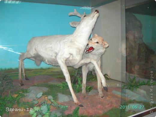 Милые Мастерицы! Приглашаю на экскурсию! ПОЛК (Природно-оздоровительный лесной комплекс) Бурабай открыл двери нового Музея природы.  фото 23