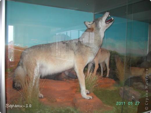 Милые Мастерицы! Приглашаю на экскурсию! ПОЛК (Природно-оздоровительный лесной комплекс) Бурабай открыл двери нового Музея природы.  фото 25