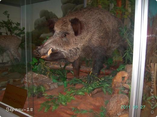 Милые Мастерицы! Приглашаю на экскурсию! ПОЛК (Природно-оздоровительный лесной комплекс) Бурабай открыл двери нового Музея природы.  фото 26