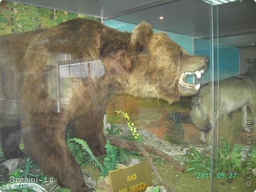 Милые Мастерицы! Приглашаю на экскурсию! ПОЛК (Природно-оздоровительный лесной комплекс) Бурабай открыл двери нового Музея природы.  фото 27