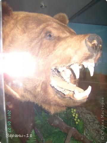 Милые Мастерицы! Приглашаю на экскурсию! ПОЛК (Природно-оздоровительный лесной комплекс) Бурабай открыл двери нового Музея природы.  фото 28