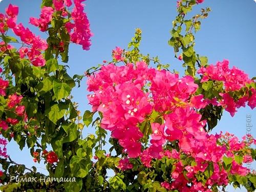 о-ров ЗАКИНТОС....Среди изумрудных вод Ионического моря расположился настоящий райский уголок — древний остров Закинф (Zakynthos), воспетый поэтами и своей историей уходящий в далекое прошлое. Остров называли «Цветком средиземного востока» — и действительно, красота Закинфа достойна кисти художника — золотые песчаные дюны, окаймленные пышной зеленью и вековыми соснами, живописные бухты, окруженные причудливыми скалами, оливковые и апельсиновые рощи, ухоженные виноградники и уютные деревушки с узкими улочками и старинными монастырями. Остров известен с доисторических времен и считается первым местом обитания Закинфа — сына царя Фригии Дардано. Жители острова сражались на стороне Одиссея в Троянской войне и позднее установили демократическое правление. Еще в далеком прошлом, благодаря своему географическому положению и большому запасу смолы, остров познал свой политический и торговый расцвет. Он занял нейтральную позицию в войне с персами, а в Пелопоннесской войне сражался на стороне афинян. Закинф был покорен воинами Александра Македонского и позже — римлянами, которые предоставили ему частичную автономию. Христианство, согласно древним преданиям, было распространено на острове с появлением там Марии Магдалины в 34 году н. э. На всем протяжении Византийской эпохи остров подвергался нападениям морских пиратов и вандалов, позже — крестоносцев. Закинф имел всегда и сохраняет по сей день высокий уровень культуры.  фото 15