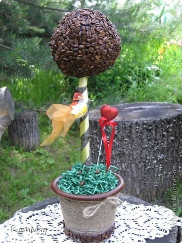 Новое кофейное деревце на День рождения тёти мужа - большой любительнице кофе и птиц. Высота деревца - 45 см, диаметр кофейного шара - 14 см  фото 4