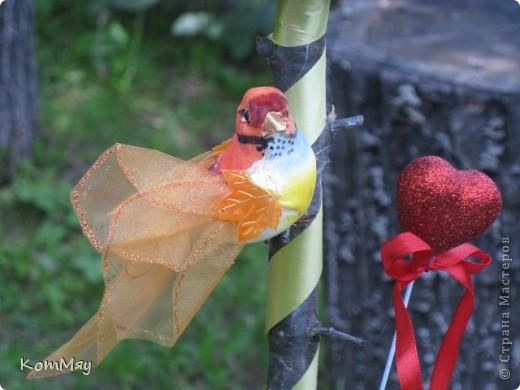 Новое кофейное деревце на День рождения тёти мужа - большой любительнице кофе и птиц. Высота деревца - 45 см, диаметр кофейного шара - 14 см  фото 2
